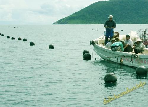 Vùng nuôi trai lấy ngọc của anh Tuấn ngoài Côn Đảo.